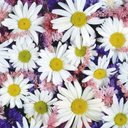 flowers - wallpaper for girls - 128x128
